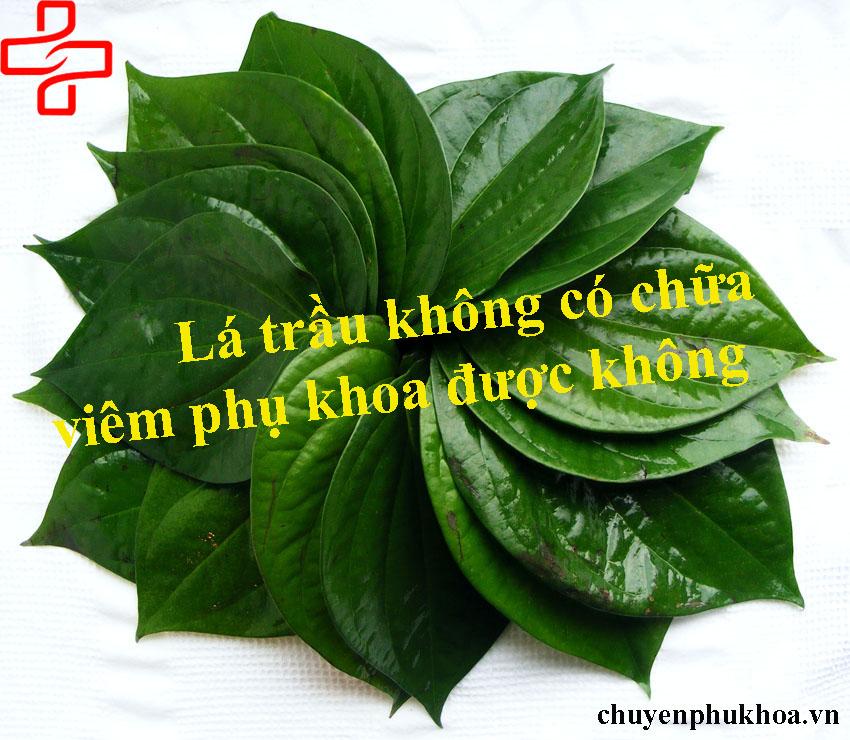 chua-viem-nhiem-phu-khoa-bang-la-trau-khong